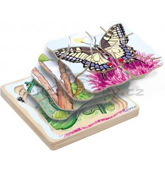 Vývojová stádia - motýlek
